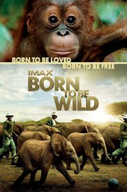 Born to Be Wild is the best movie in Dafna Sheldrik filmography.